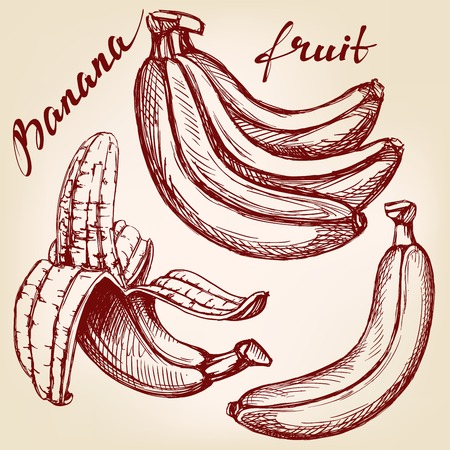 Bananas fruit set hand drawn vector llustration realistic sketch Illustration
