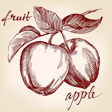 apples on apple tree branch fruit hand drawn vector llustration realistic sketch Illustration