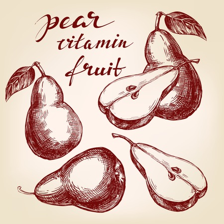 fruit pear set hand drawn vector llustration realistic sketch Illustration