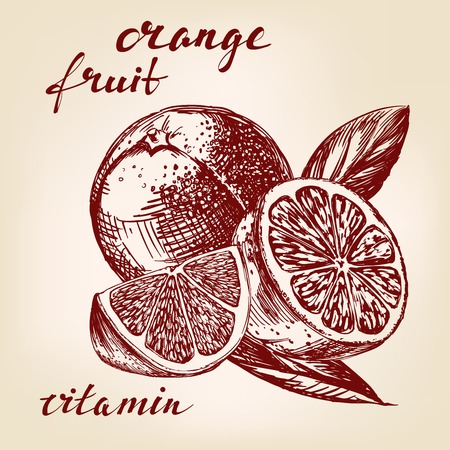 naranja fruta: fruit orange set hand drawn vector llustration realistic sketch Vectores