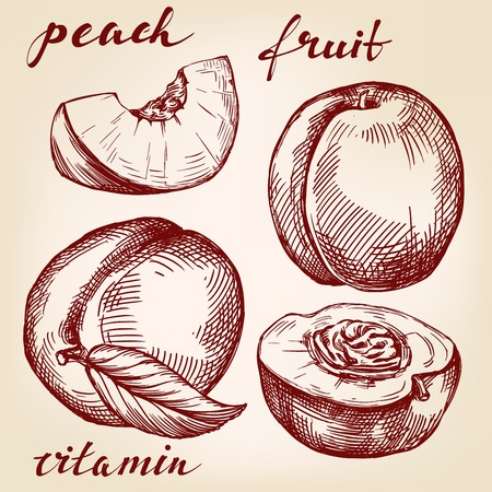 nectarine: fruit peach set hand drawn vector llustration realistic sketch
