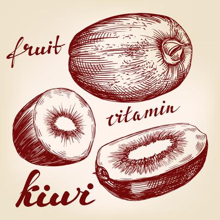 exotic fruit: fruit kiwi set hand drawn vector llustration realistic sketch Illustration