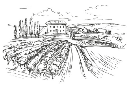 vineyards: Vineyard hand drawn vector illustration realistic sketch