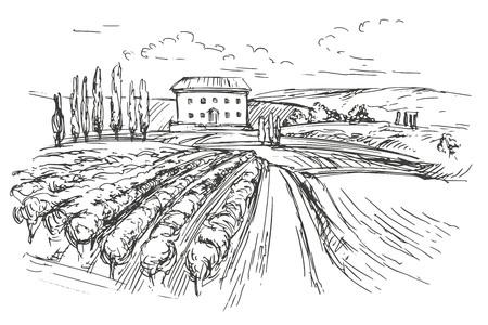 Vineyard hand getekende vector illustratie realistische schets