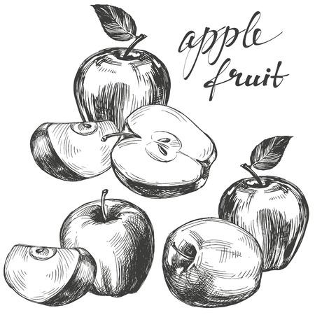 half: apple fruit set hand drawn vector llustration sketch