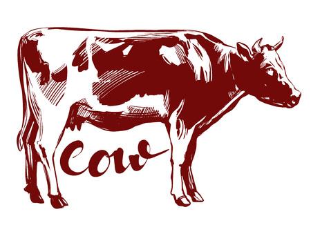 cow - domestic animal, farm hand drawn vector illustration realistic sketch Illustration