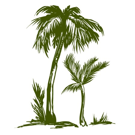 Palm collection hand drawn vector illustration sketch