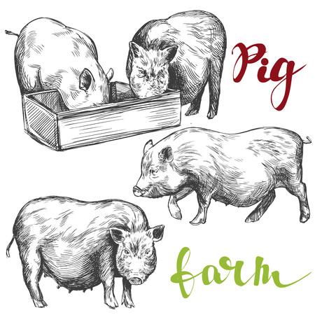 porcine: farm, pig set hand drawn vector illustration realistic sketch