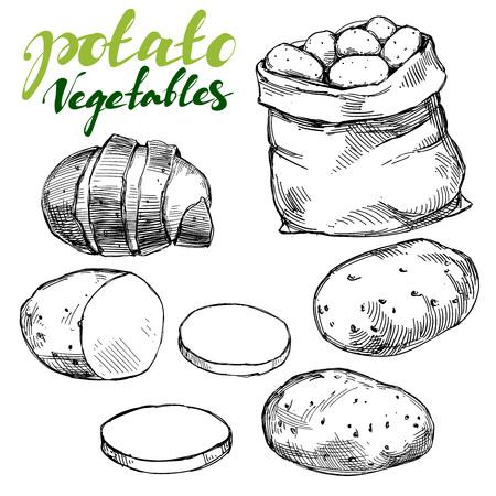 Landbouw, aardappelset vastgestelde hand getrokken illustratie realistische schets