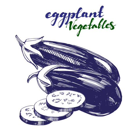 Hand drawn illustration of realistic eggplant.