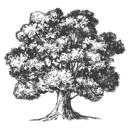 Drzewo ręcznie rysowane wektor ilustracja realistyczny szkic