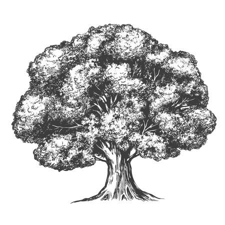 Realistische Skizze der gezeichneten Vektorillustration des Baums Hand