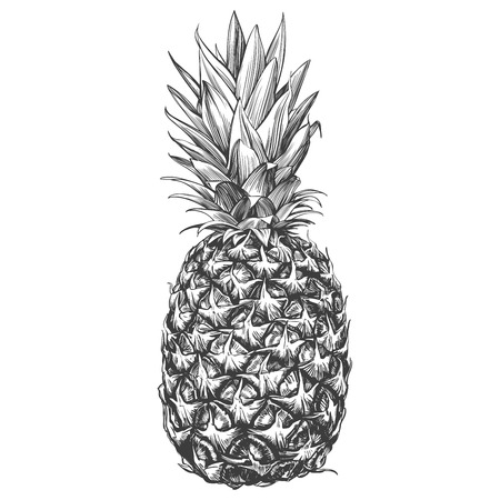 fruit pineapple hand drawn vector illustration realistic sketch.
