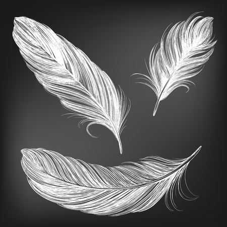 feathers white set collection hand drawn vector illustration sketch, drawn in chalk on a black Board. Ilustração