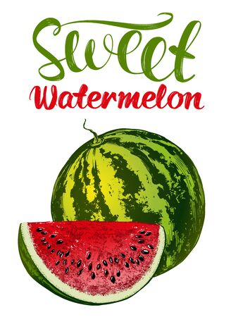 fruit watermelon, logo, calligraphic text hand drawn vector illustration realistic sketch color