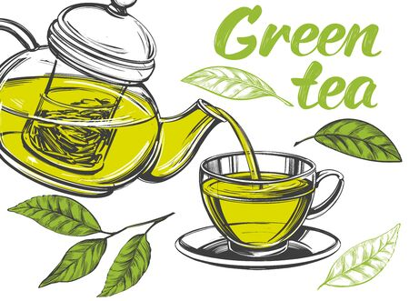 green tea, Cup of tea and teapot isolated on white background hand drawn vector illustration realistic sketch