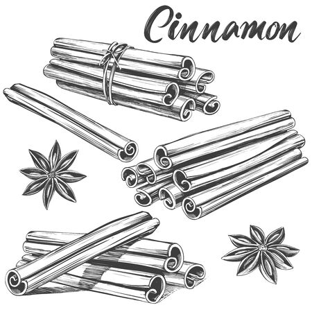 cinnamon seasoning ingredient for cooking food isolated on white background hand drawn vector illustration realistic sketch Ilustração