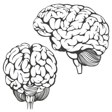 Gehirnsammlung, menschliche Anatomie, gezeichnete Vektorillustrationsskizze der Ikonenkarikatur Hand.
