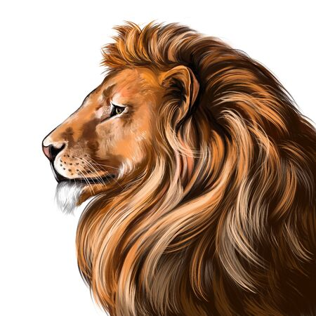 animal lion, king of beasts, art illustration painted with watercolors isolated on white background Foto de archivo