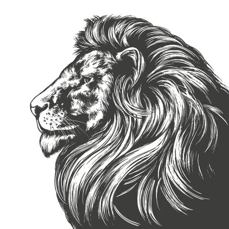 animal lion, king of beasts, hand drawn vector illustration realistic sketch Vectores