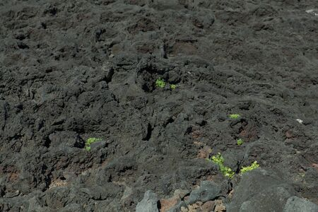 Black volcanic rocks and green grass forming a peculiar contrast landscape at Pico, Azores, Portugal