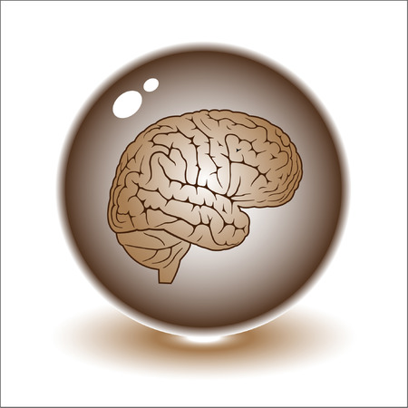 Vector brain illustration. Simply change. Other medical vectors you can see in my portfolio. Stock Vector - 3219702