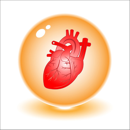 Vector heart illustration. Simply change. Other medical vectors you can see in my portfolio. Vector