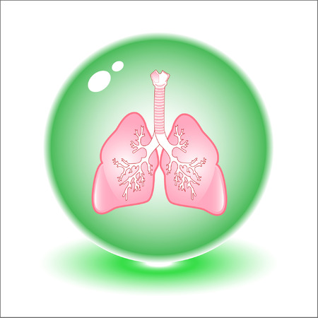 aparato respiratorio: Vector pulmones ilustraci�n. Simplemente el cambio. Otros m�dicos vectores se puede ver en mi cartera.