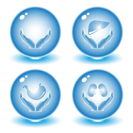 foie humain: Vector m�dical ic�nes. Blue set. Il suffit de changer. Autres ic�nes m�dical vous pouvez le voir dans mon portefeuille.