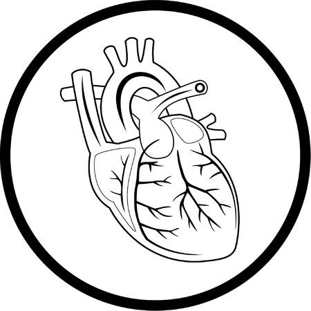 organos internos: Vector coraz�n icono. Blanco y negro. Simplemente el cambio.