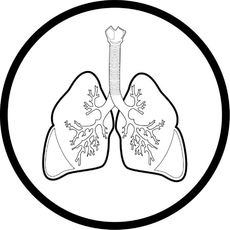 pulmones: Vector lungs icon. Black and white. Simply change.