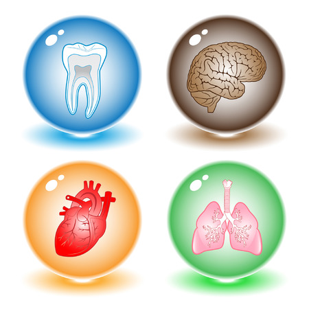 bronchus: Vector medical icons. Other medical icons you can see in my portfolio. Illustration