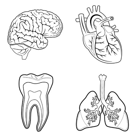 organs: Vector medical icons. Black and white. Simply change. Other medical icons you can see in my portfolio.