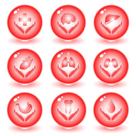 foie humain: Vector m�dical ic�nes. Red fix�s. Il suffit de changer. Autres ic�nes m�dical vous pouvez le voir dans mon portefeuille.