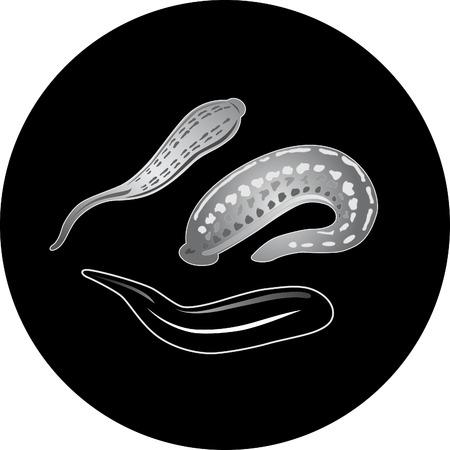 sanguijuela: Vector. Ilustraci�n de m�dicos baluma. Vectores