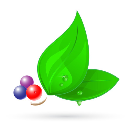 Vector 3d leaf icon Vector