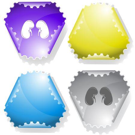 Kidneys. sticker. Stock Vector - 6695862