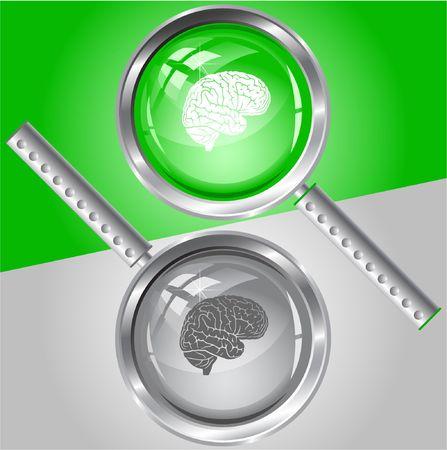 Brain.  magnifying glass. Stock Vector - 6732375