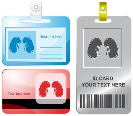organos internos: Ri�ones. tarjetas de identificaci�n.