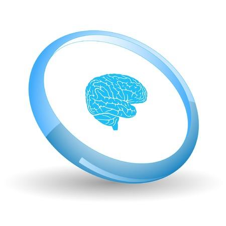 organi interni: Cervello.  Vettoriali