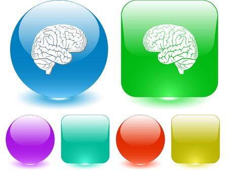 anatomy brain: Cervello. Elemento di vettore di interfaccia.