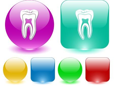 molar: Tooth. Vector interface element. Illustration