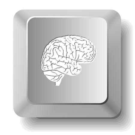 脳。コンピューターのキー。  イラスト・ベクター素材