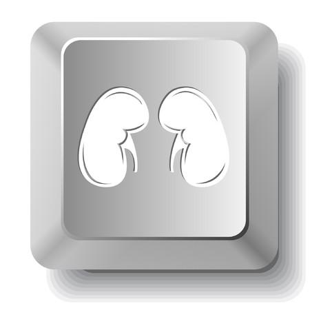 Kidneys. computer key. Vector