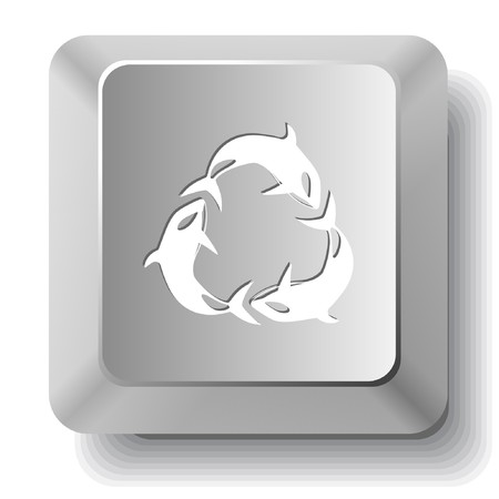 Killer whale. computer key. Stock Vector - 7523488