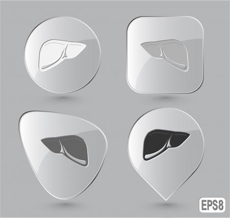 Liver. Glass buttons. Vector illustration. illustration
