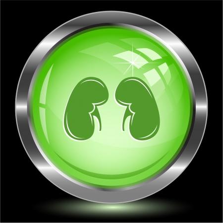 Kidneys. Internet button. Stock Photo - 16805139