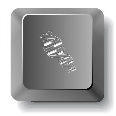 DNA. Vector computer key. Stock Photo - 17127641