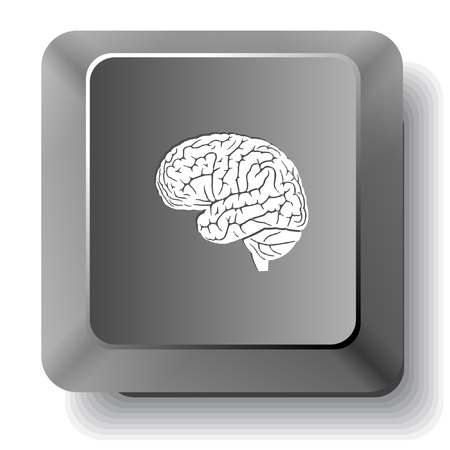 Brain  Vector computer key  photo