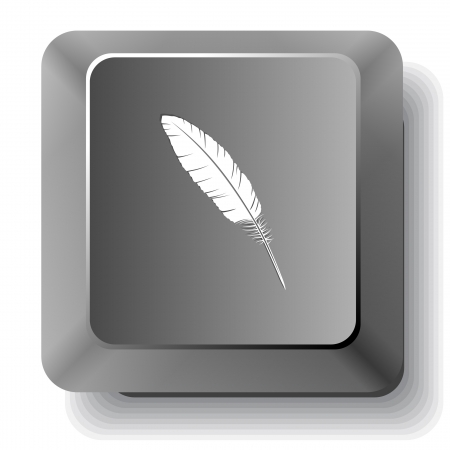 Feather. Vector computer key. photo